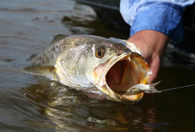North Carolina saltwater fishing