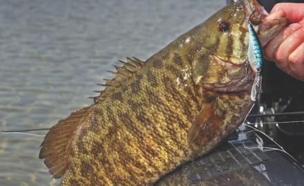 Michigan smallmouth bass