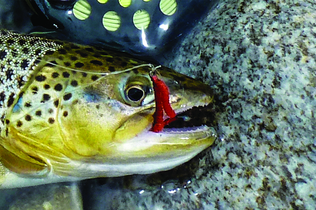 How to Catch the Biggest Trout in the Stream