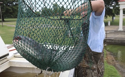 Baxter Land Company Fish Farm in Arkansas City donated more than 12,000 pounds of blue catfish,