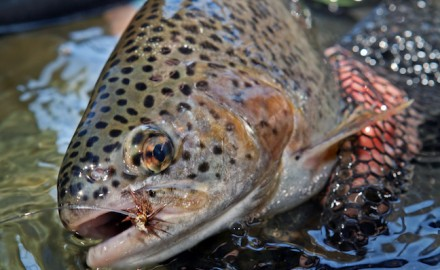 Don't let the warming weather put an end to your trout fishing season, as great action can still