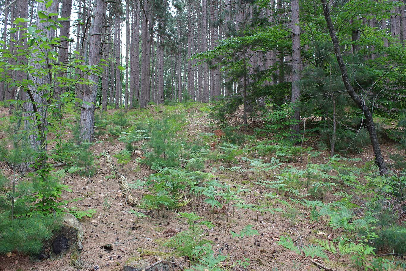 Manage Your Forest to Manage Your Whitetails