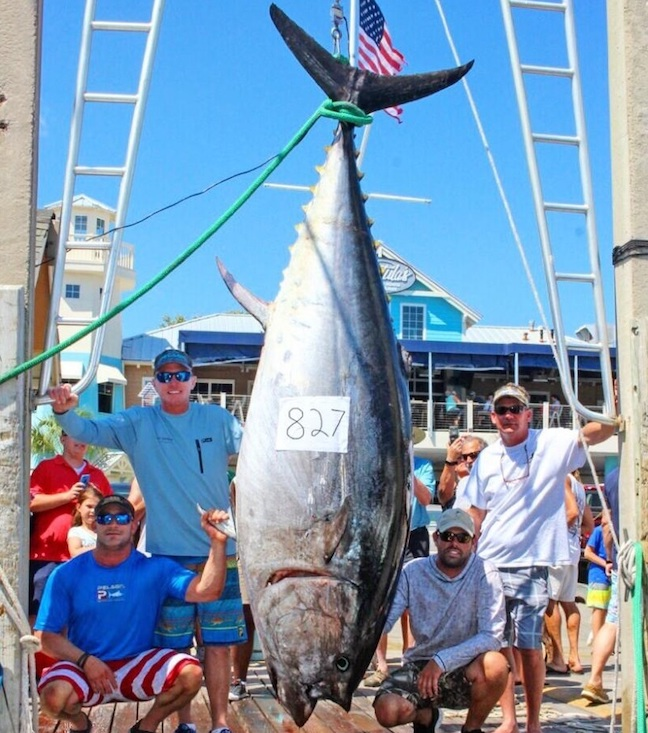 Huge Tuna Among 5 Saltwater State Records Approved in Florida