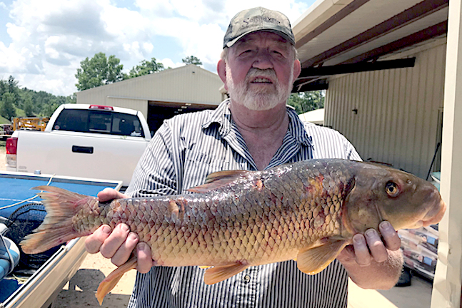 Missouri hot streak for state records continues game fish for Missouri state record fish