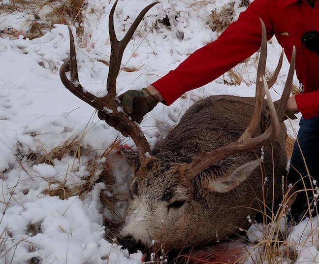 Poaching News: Cast-Netting for Bass, Buck Mule Deer Charges, Holy Mackerel!