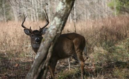 deer gear