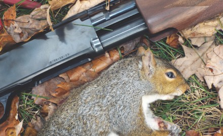 Squirrels are one of the most abundant game species in the woods, but that doesn't mean they are easy to find or put in the bag.