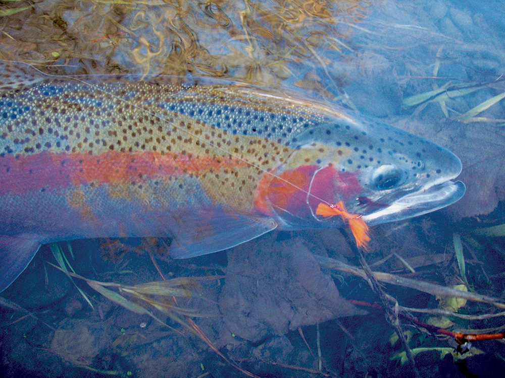 //www.gameandfishmag.com/files/best-february-fishing-in-your-state/va.jpg