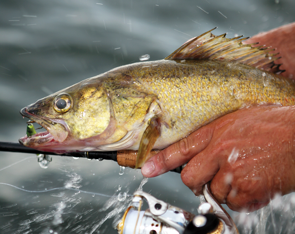 //www.gameandfishmag.com/files/best-spring-fishing-in-your-state/oh-mar-may.jpg