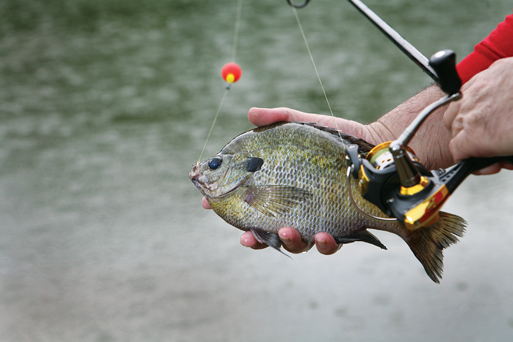 //www.gameandfishmag.com/files/best-spring-fishing-in-your-state/ok-mar-may.jpg