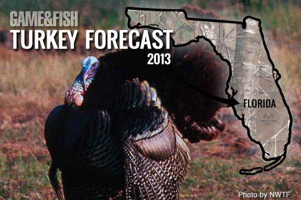 //www.gameandfishmag.com/files/gf-turkey-forecast-2013/florida-feat-img.jpg