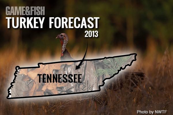 G&F Forecast: Louisiana Turkey Hunting in 2013