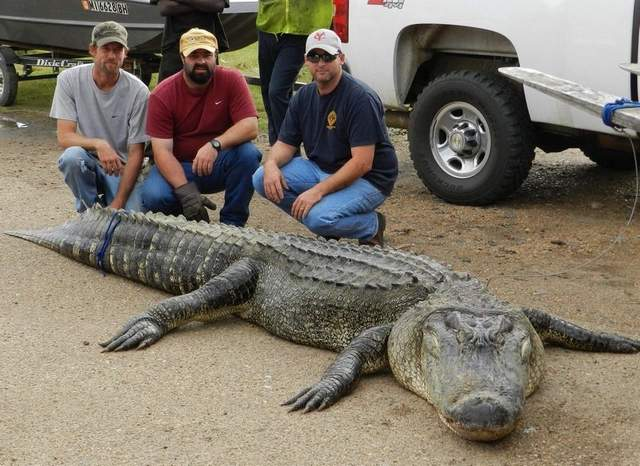 10 Biggest Gators You've Never Heard About