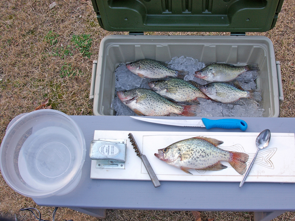 How To Filet A Crappie Game Fish