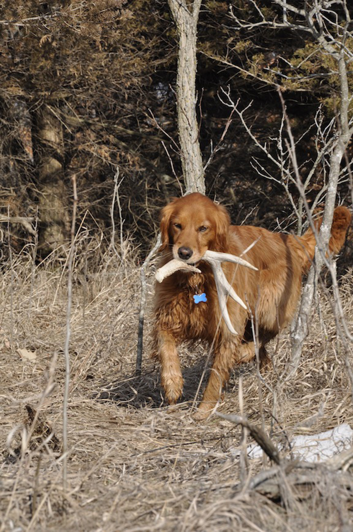 //www.gameandfishmag.com/files/sheds-why-your-dog-will-out-hunt-you/3-access.jpg
