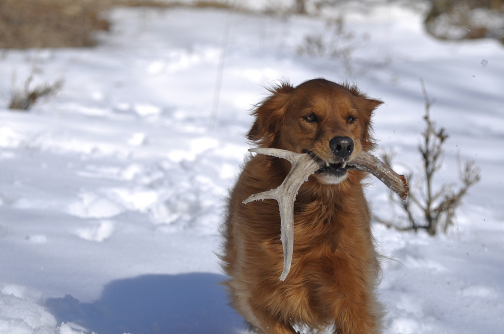 //www.gameandfishmag.com/files/sheds-why-your-dog-will-out-hunt-you/4-eyesight.jpg