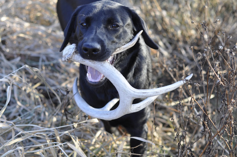 //www.gameandfishmag.com/files/sheds-why-your-dog-will-out-hunt-you/7-no-preconceived-notions.jpg