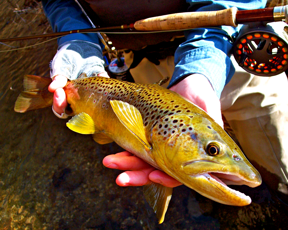 //www.gameandfishmag.com/files/top-ten-trout-trips-in-america/trout-slide-3.jpg