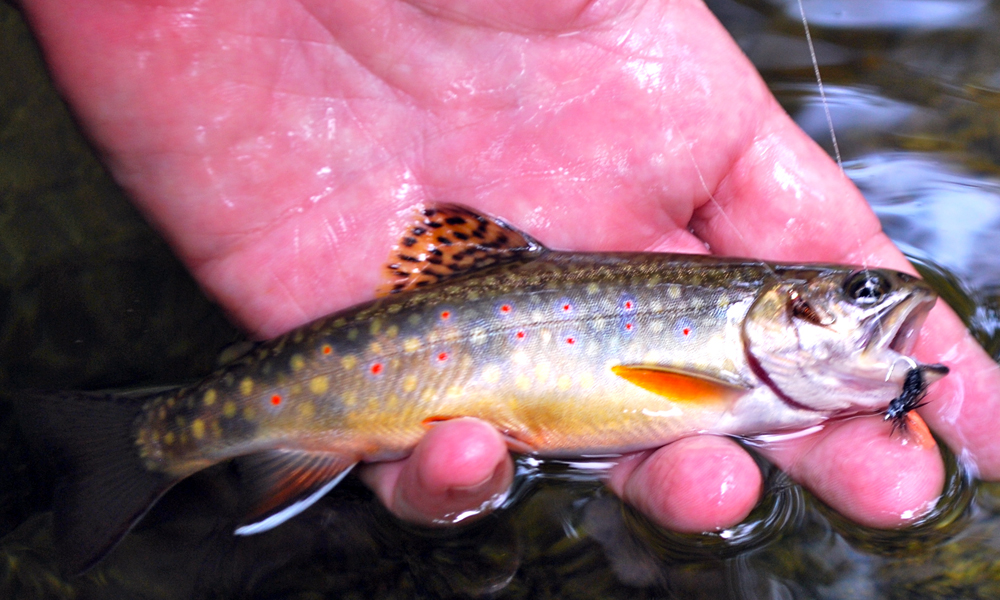 //www.gameandfishmag.com/files/top-ten-trout-trips-in-america/trout-slide-8.jpg