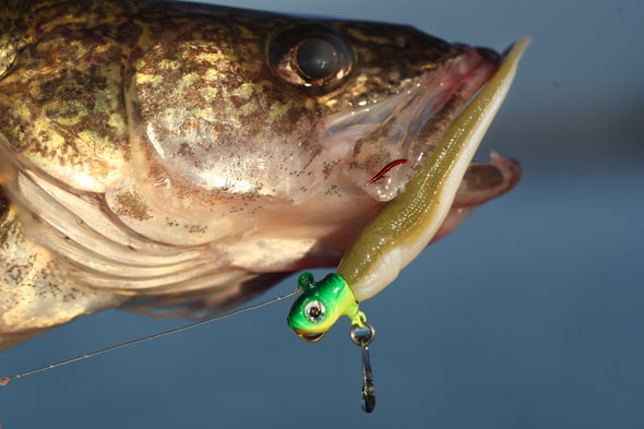 Walleye spinnerheads never stop attracting. When they fall, the blade turns. Slow-roll