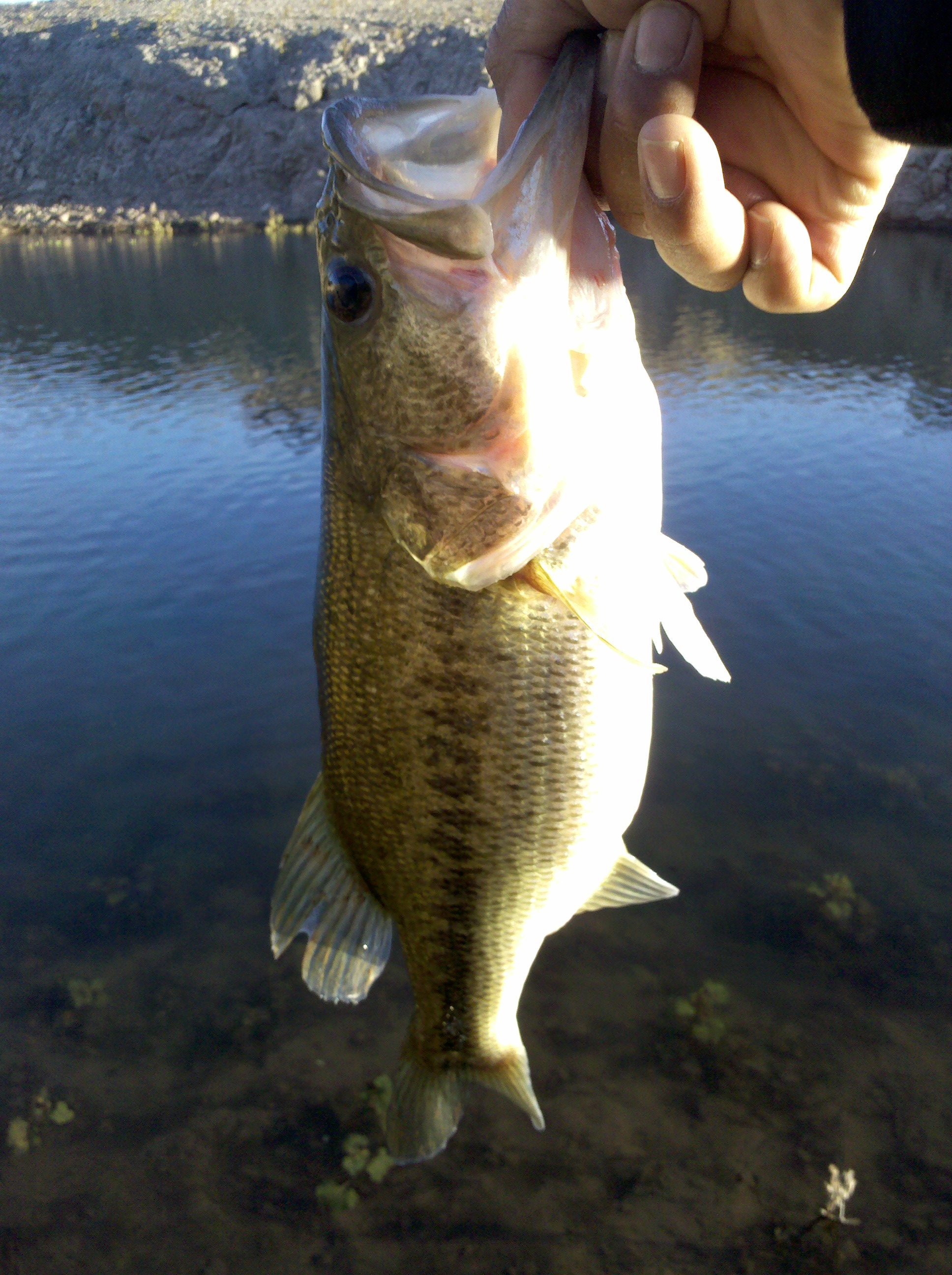 First catch of the day