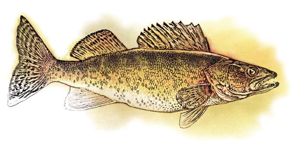 An Angler's Evolution