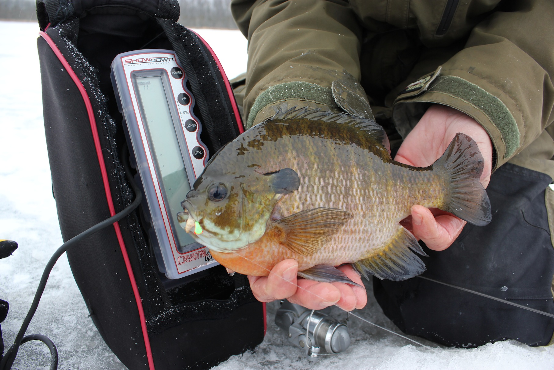 Two Fisted Bluegills