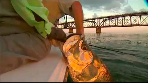 Tarpon Jig Fishing