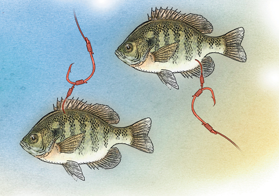 best way to bait a hook
