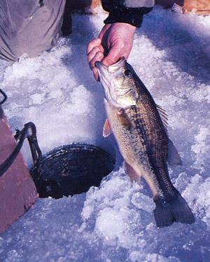 Ice Fishing Bass Location