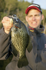 Transition Crappies