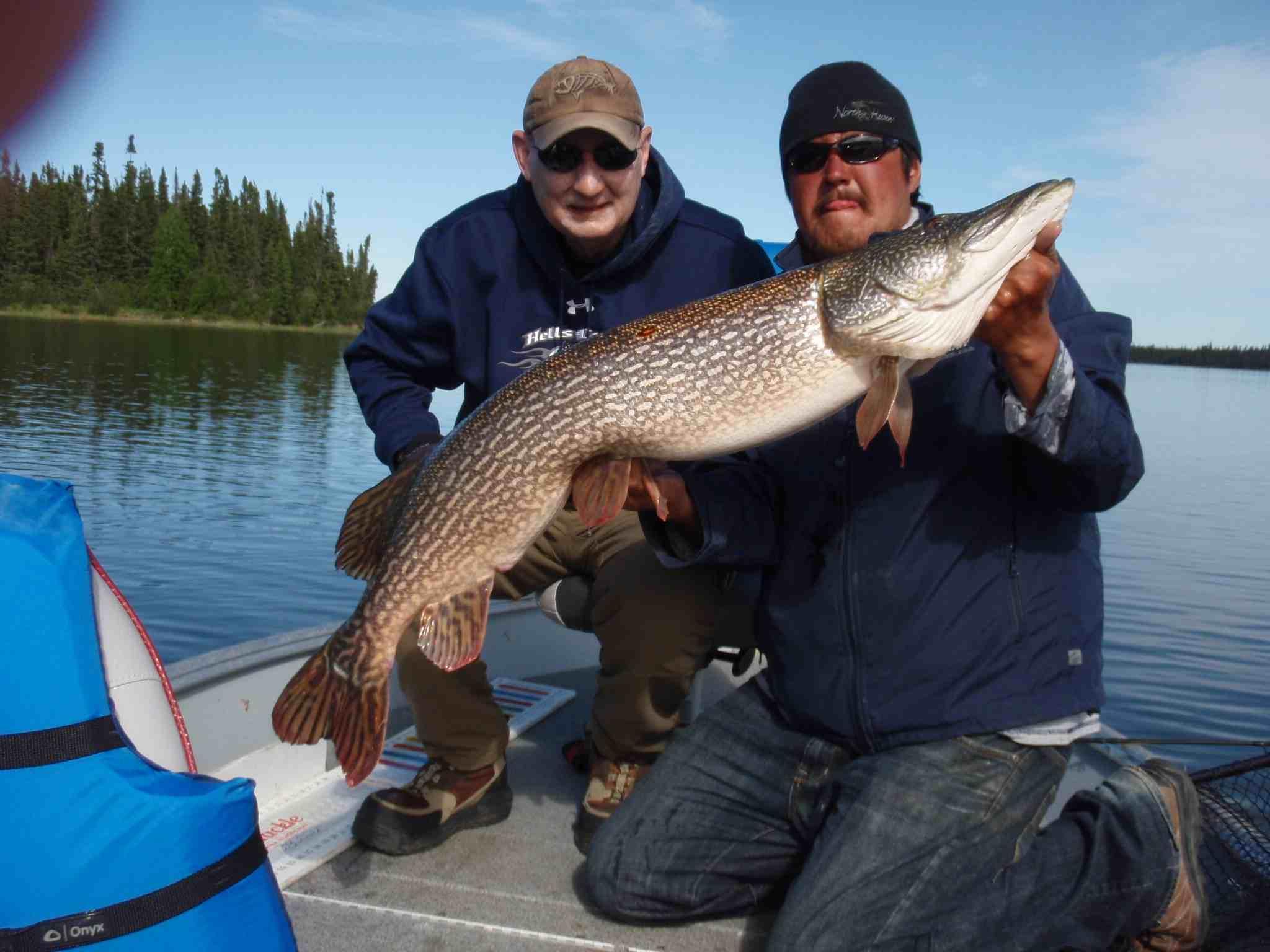 43.5-inch Northern Pike