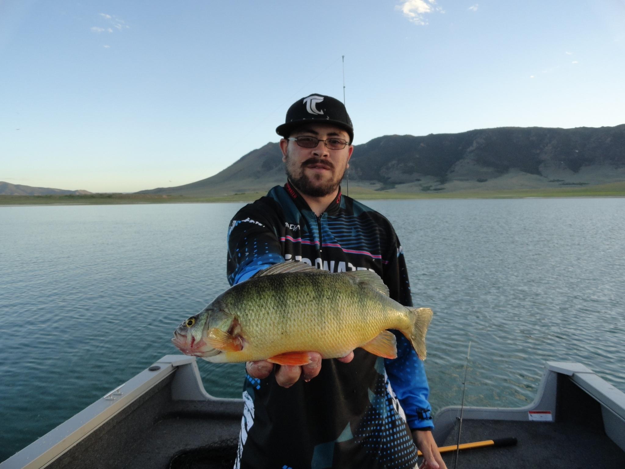 The Elusive Lake Hattie Perch