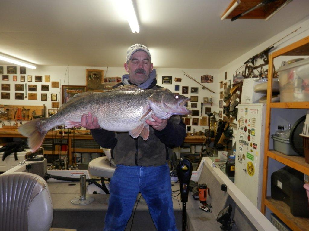 Giant 20-Pound Record Walleye Pending In Washington