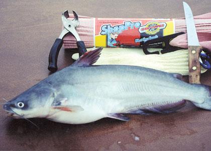 Amazing Catfish Cleaning Method