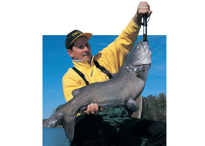 Catfish Bait Options