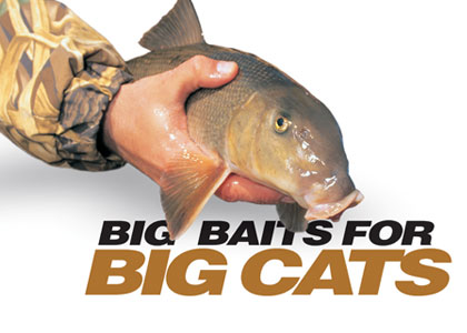Big Catfish Baits