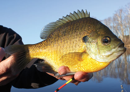 5 Fantastic Panfish Float Rigs
