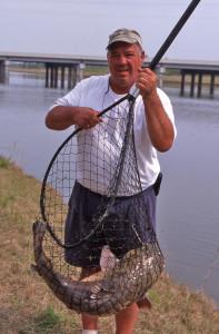 Netted-Bankfishing-Catfish-In-Fisherman