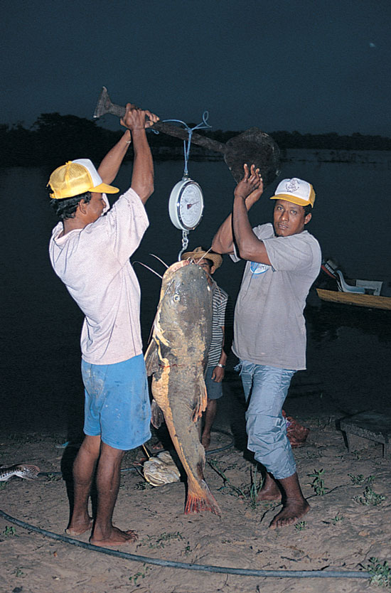 South American Catfish Expedition