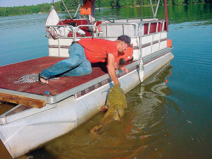 Pontoon-Flathead-Catfish-Boatside-In-Fisherman