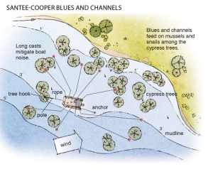 Santee-Cooper-Blues-and-Channel-Catfish-In-Fisherman