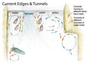 Current-Edges-and-Tunnels-In-Fisherman