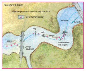 Postspawn-Blues-In-Fisherman