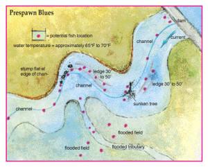 Prespawn-Blues-In-Fisherman