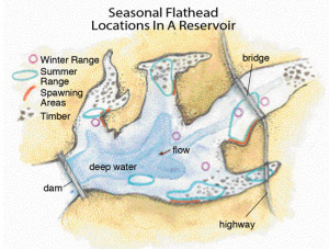 Seasonal-Flathead-Locations-In-A-Reservoir-In-Fisherman