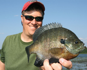 2015 Drop Shottin's Hot For Panfish