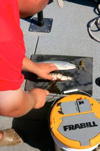 Tips For Catfish