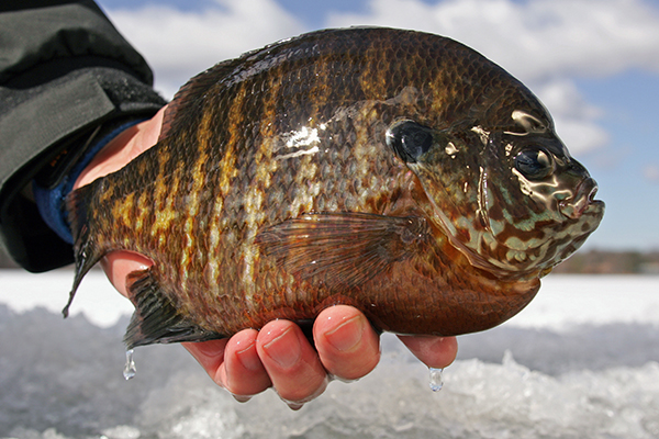 All About Ice Fishing