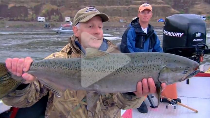 Western King Salmon